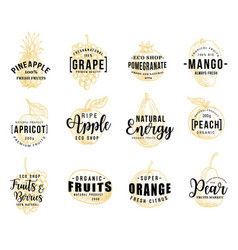 fruits and berry lettering icons vector image