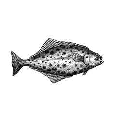 ink sketch halibut vector image