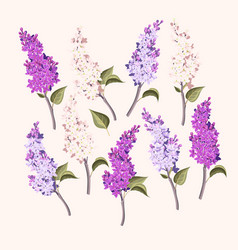 Set branches purple and white lilac vector