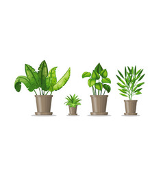 Set with four potted plants vector