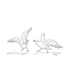 sketch two angry seagulls fighting hand drawn vector image