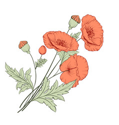 Vintage poppy bouquet vector