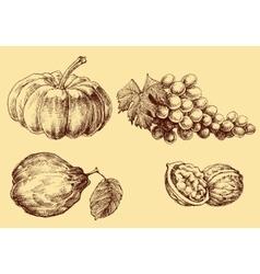 Fruits set hand drawn vector image vector image
