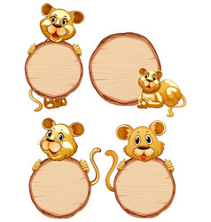 board template with cute lioness on white vector image