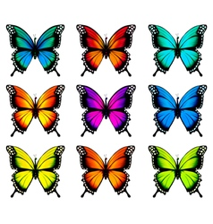 Collection of colorful butterflies flying in vector image
