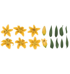 Floral bouquet design set of tender yellow lily vector