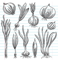 Set of onions vector