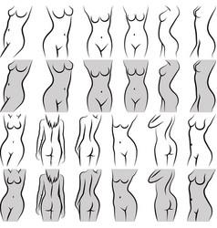 torso vector image