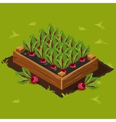 Vegetable Garden Box with Beet Set 3 vector