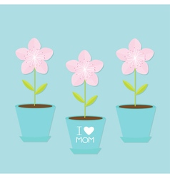 Sakura flower pot set Japan blooming cherry vector image