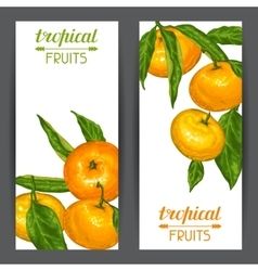 Banners with mandarins Tropical fruits and leaves vector image
