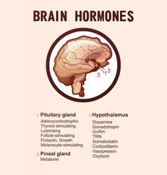Human brain hormones information poster vector