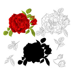 red rose with buds and leaves natural and outline vector image