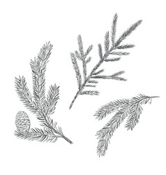 Spruce branch set collection of fir-tree vector