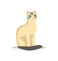 adorable short-haired beige cat with dark tail vector image