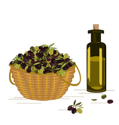 basket with ripe olives harvest and the vector image
