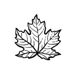 Ink sketch maple leaf vector