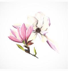 magnolia color pencils hand drawing image vector image