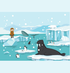 north pole arctic white bears seal and penguins vector image