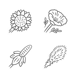 Wild flowers linear icons set helianthus vector