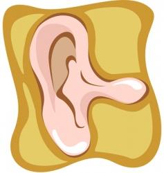 ear vector image vector image