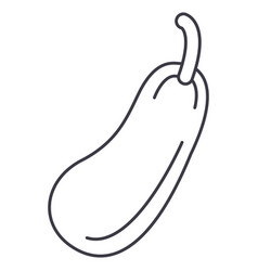 zucchini line icon sign on vector image
