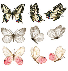beautiful watercolor butterfly collection in vector image