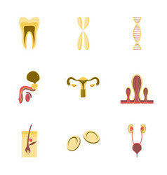 Icons set in flat style human organs cell vector