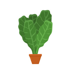 Lettuce planted in brown pot vector