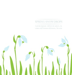 Snowdrops spring background vector