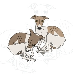 Two Italian greyhound vector