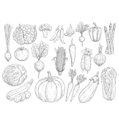 Vegetables sketch isolated icons vector