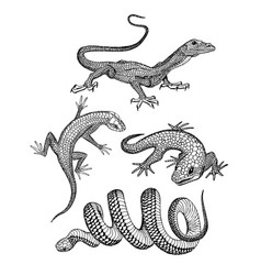 lizards and snake skin pen and ink drawed vector image