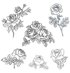 Set rose sketch vector