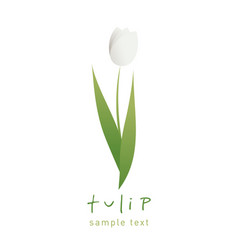 simple and stylized tulip flower isolated on vector image