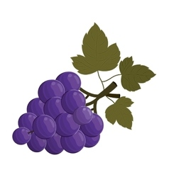 bunch of grapes fruit vector image