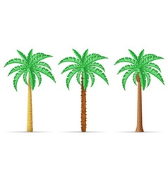 palm tree 29 vector image