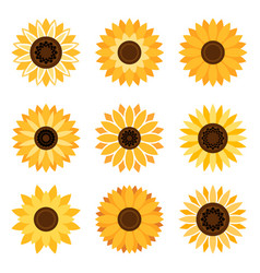 sunflower emblem set vector image