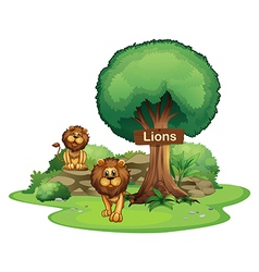 Two lions with a wooden signboard vector image