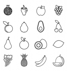 fruit drawing vector image