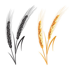 Black ang gold wheat isolated on white background vector