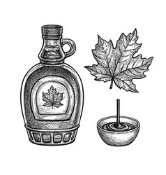 ink sketches maple syrup and leaf vector image
