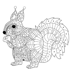 Squirrel Coloring for adults vector image