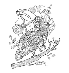 Toucan bird coloring book for adults vector image vector image