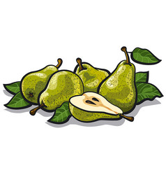 fresh tasty pears vector image vector image