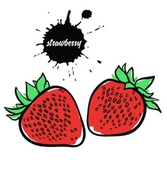 berry red strawberry vector image