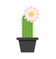 cactus in pot with flower on the top vector image