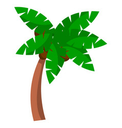 coconut palm tree on a white background bent palm vector image