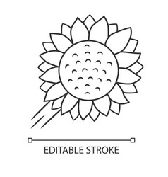 Helianthus linear icon sunflower head field vector