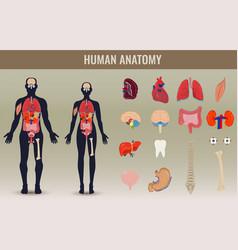 Human internal organs icons set human anatomy vector